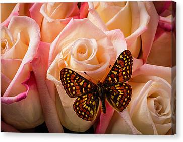 Small Butterfly On Pink Roses Canvas Print