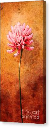 Small Clover Canvas Print