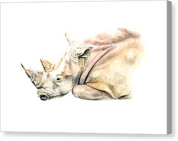 Small Colour Rhino Canvas Print