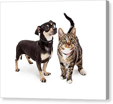 Small Dog And Cat Looking Up Together Canvas Print by Susan Schmitz