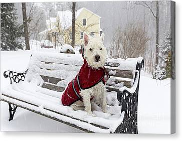 Small Dog Park Bench Snow Storm Canvas Print