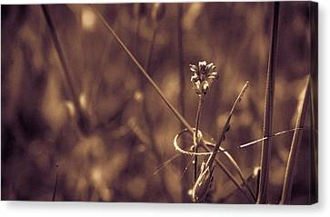 Canvas Print featuring the photograph Small by Lora Lee Chapman