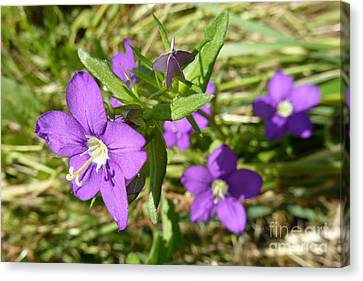 Canvas Print featuring the photograph Small Mauve Flowers by Jean Bernard Roussilhe