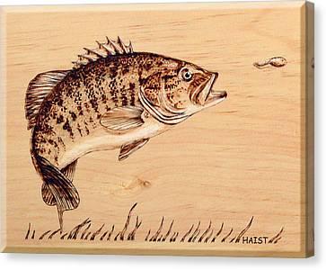 Small Mouth Bass Canvas Print by Ron Haist