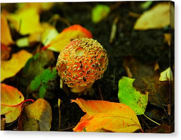 Small Mushroom In Autumn Canvas Print by Jeff Swan