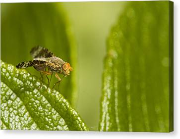Small Orange Fly Canvas Print