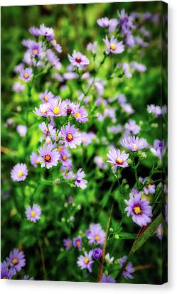 Small Purple Wildflowers Of Wisconsin Canvas Print