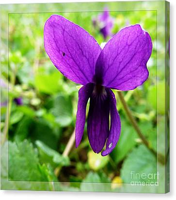 Small Violet Flower Canvas Print by Jean Bernard Roussilhe