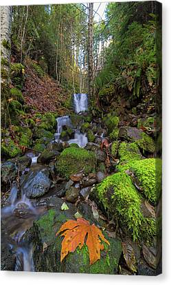 Small Waterfall At Lower Lewis River Falls Canvas Print by David Gn