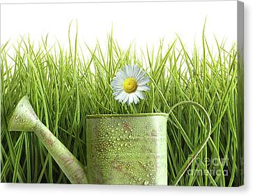 Small Watering Can With Tall Grass Against White Canvas Print