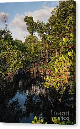 Small Waterway In Vitolo Preserve, Hutchinson Isl  -29151 Canvas Print by John Bald