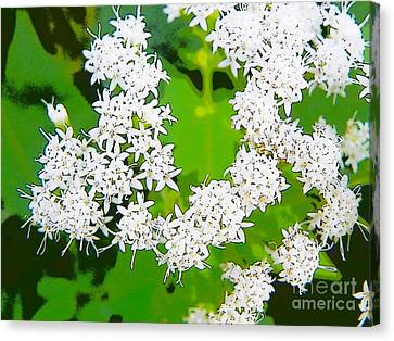 Small White Flowers Canvas Print by Craig Walters