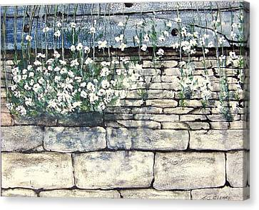 Small White Flowers Canvas Print by Terence John Cleary