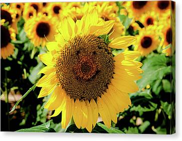 Smile Canvas Print by Greg Fortier