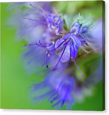 Smile Of Bell Flower Nr. 1 Canvas Print by Mah FineArt