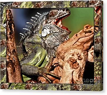 Smiling Adult Iguana  Canvas Print by Carol F Austin