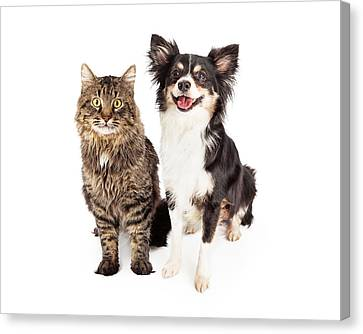 Smiling Chihuahua Mixed Breed Dog And Cat Together Canvas Print