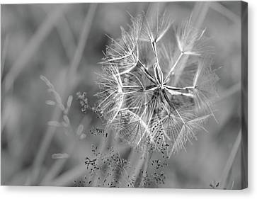Symbolically Canvas Print - Smiling Dandelion by Mah FineArt