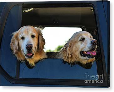 Smiling Dogs Canvas Print