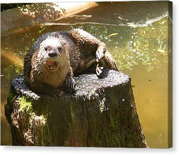 Smiling Otter Canvas Print by Elena Tudor