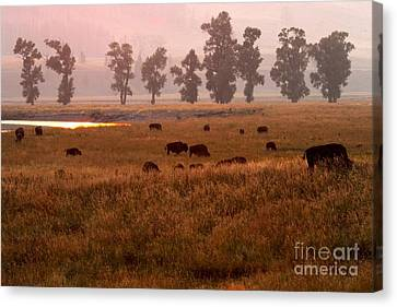 Bison Heard Canvas Print - Smoke Over Lamar Valley by Adam Jewell
