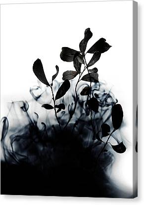 Smoke Without Fire II Canvas Print
