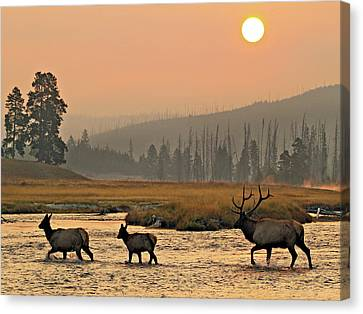 Smokey Elk Crossing Canvas Print