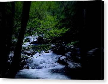 Smokey Mountain Creek Canvas Print by Martin Morehead