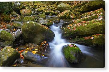 Gatlinburg Tennessee Canvas Print - Smoky Mountain Stream I I by Dennis Nelson