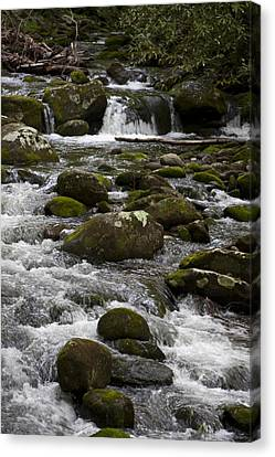 Smokies In The Spring Canvas Print by Peter Skiba