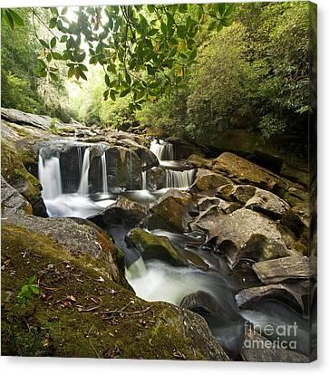 Smoky Mountain Waterfall Canvas Print by Matt Tilghman