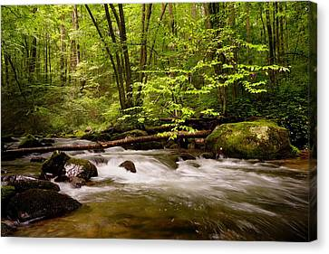 Smoky Mountain Waters II Canvas Print