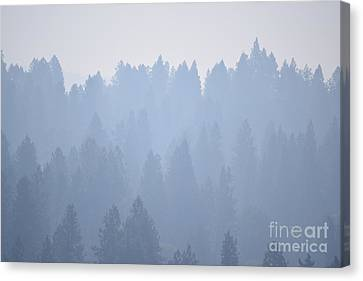 Smoky Pines Canvas Print