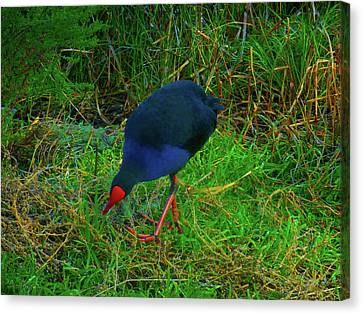 Canvas Print featuring the photograph Snacking by Mark Blauhoefer