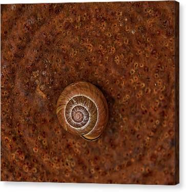 Snail On A Tin Can Canvas Print