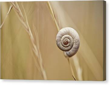 Snail On Autum Grass Blade Canvas Print by Nailia Schwarz