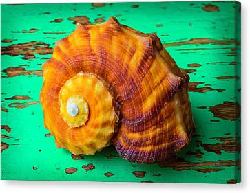 Snail Sea Shell On Green Board Canvas Print