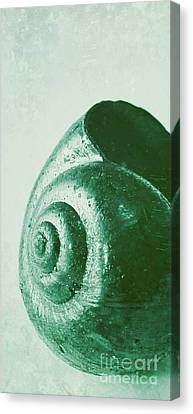 Snail Shell Canvas Print by Angela Doelling AD DESIGN Photo and PhotoArt