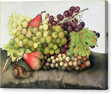 Snail With Grapes And Pears Canvas Print by Giovanna Garzoni