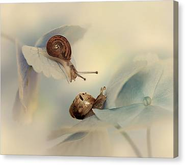Snails Canvas Print by Ellen Van Deelen