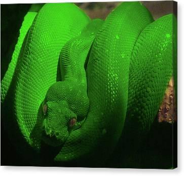 Snake Canvas Print by Jeremy Martinson