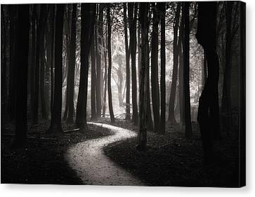 Snake Path Canvas Print