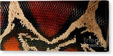 Snake's Scales Canvas Print by KD Johnson