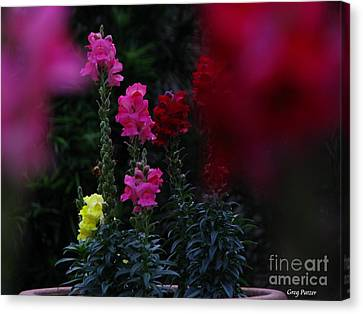 Canvas Print featuring the photograph Snapdragon by Greg Patzer