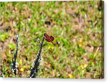 Canvas Print featuring the photograph Shimmering Saddlebags by Al Powell Photography USA