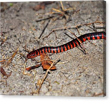 Canvas Print featuring the photograph Snazzy Snake by Al Powell Photography USA