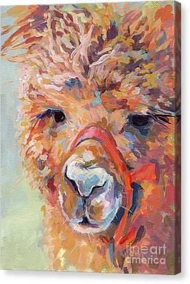 Llama Canvas Print - Snickers by Kimberly Santini
