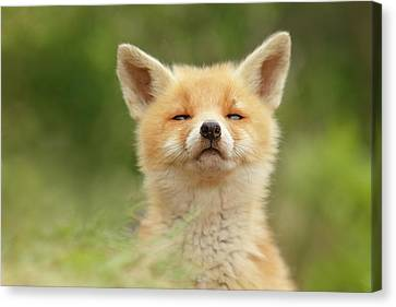 Sniffin'- Red Fox Smelling Some Fresh Air Canvas Print by Roeselien Raimond