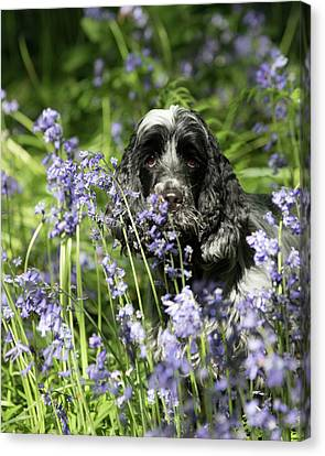 Sniffing Bluebells Canvas Print