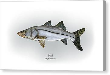 Snook Canvas Print by Ralph Martens